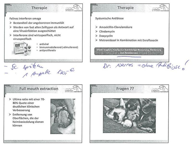 Calicivirus / Zahnfleischentzündung - Katzen Forum