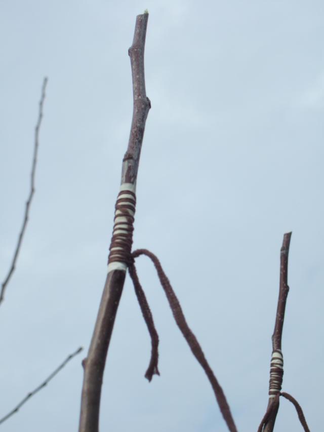kopulation obstbaum