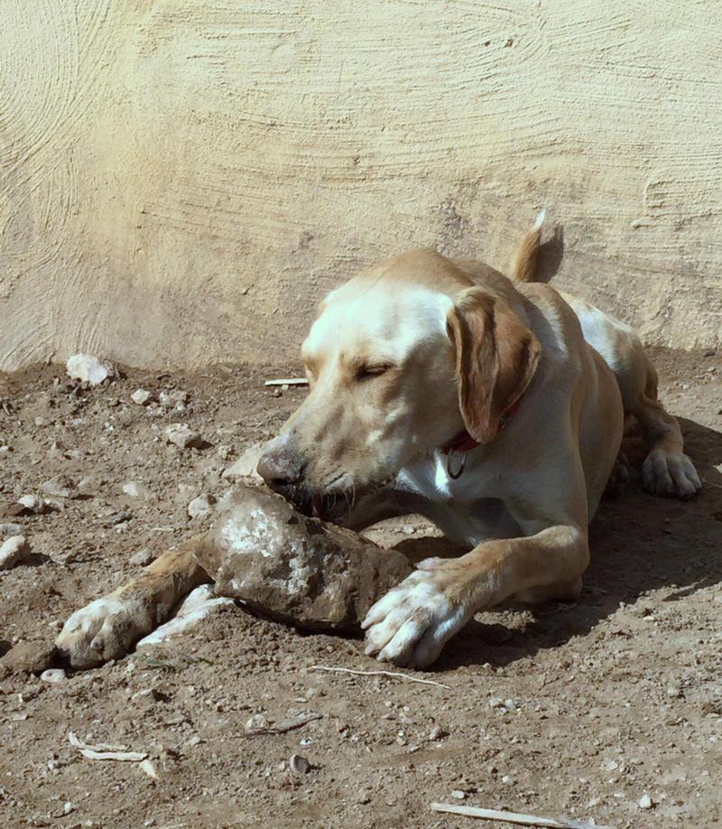 Bildertagebuch - BUSTER, ein Traumhund wurde streunend aufgefunden....... 24994118hb