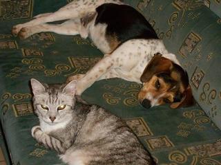 Felix, Beaglemischlingsrüde, geb. ca. Mai 2015 25009487qw