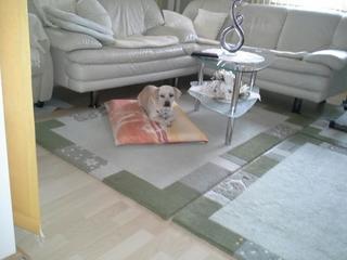 Clyde hat ein neues Zuhause gefunden 25054197by