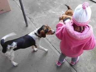 Felix, Beaglemischlingsrüde, geb. ca. Mai 2015 25066114od