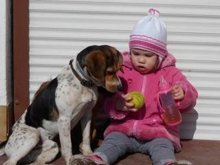Felix, Beaglemischlingsrüde, geb. ca. Mai 2015 25066115nu