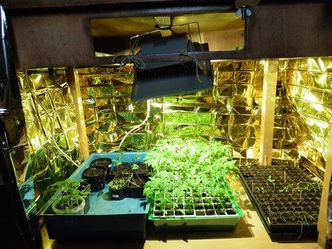 Led Grow Erfahrung : erfahrungen mit led grow panels zur jungpflanzenanzucht seite 5 selbstversorger forum e v ~ Watch28wear.com Haus und Dekorationen