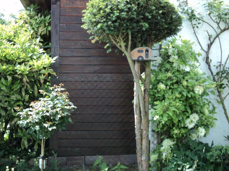 Aufgeastete thuja unterpflanzen seite 1 for Gartengestaltung thuja