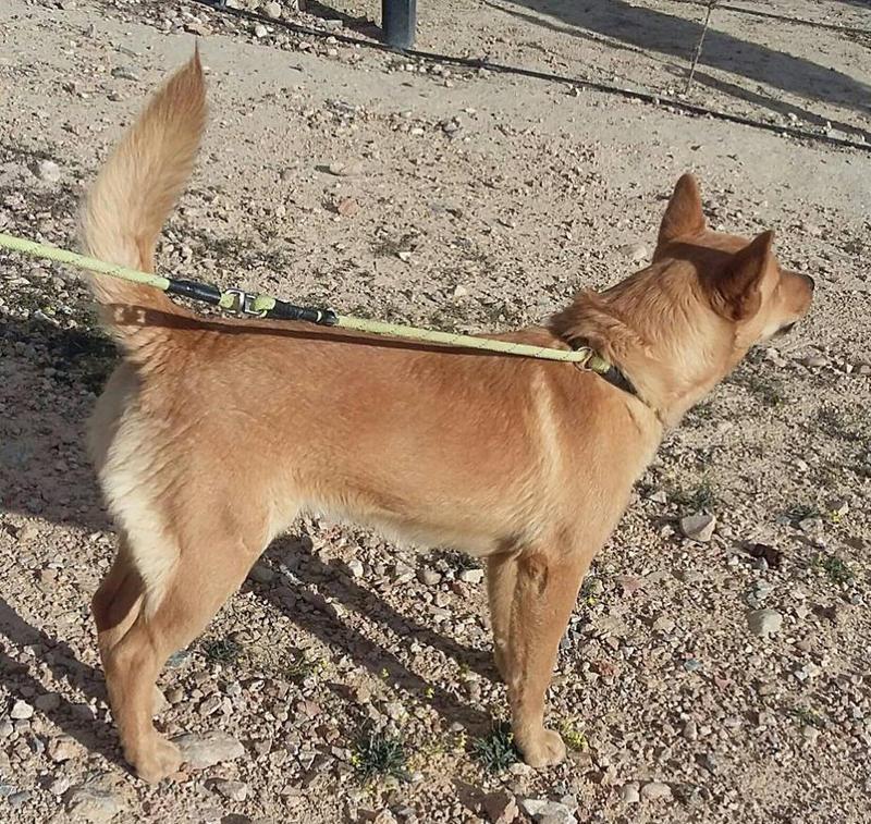 Bildertagebuch - Dingo, hübscher junger und verspielter Kerl ... Sie sind auf der Suche nach einem tollen Hundekumpel?? 25281779sv