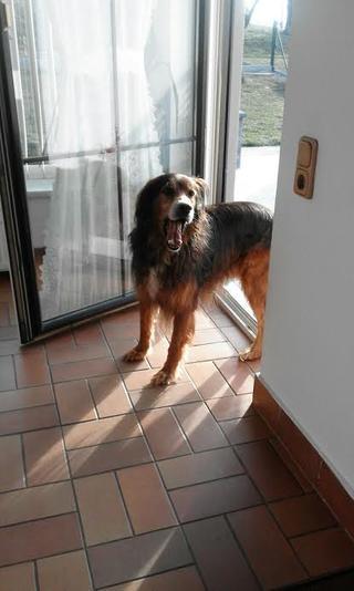 Alf hat ein neues Zuhause gefunden 25362818em