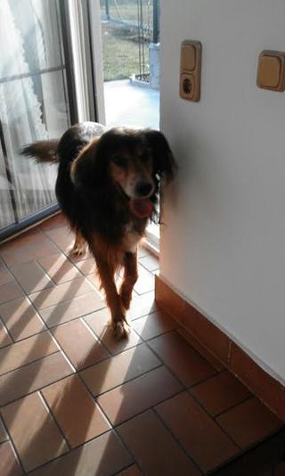 Alf hat ein neues Zuhause gefunden 25362821rw