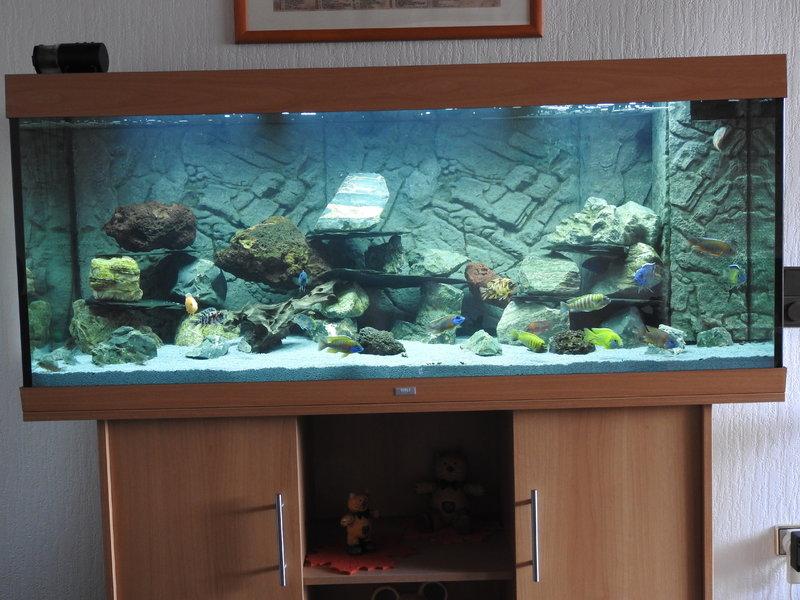 rio 400 malawibecken aquarium forum. Black Bedroom Furniture Sets. Home Design Ideas