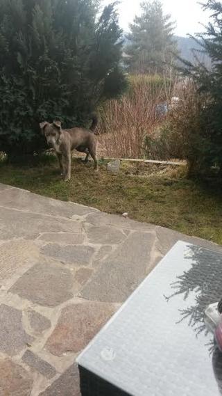 Loki (Karmi), Mischlingsrüde, geb. ca. August 2015 25424342tg