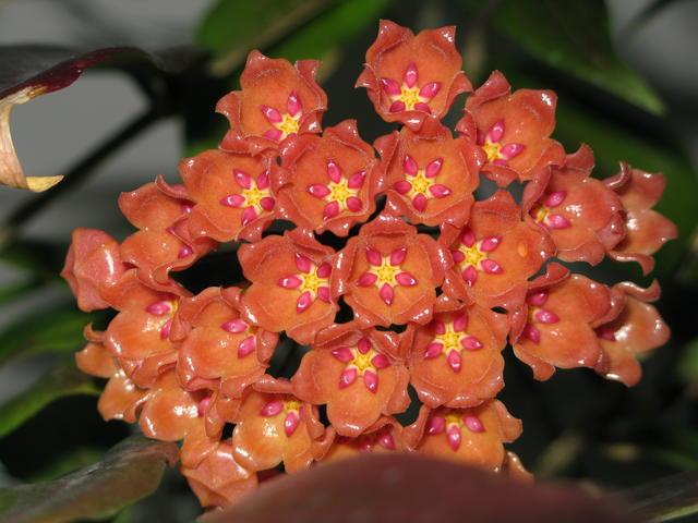 Blüten 2016 - Seite 2 25523070ny