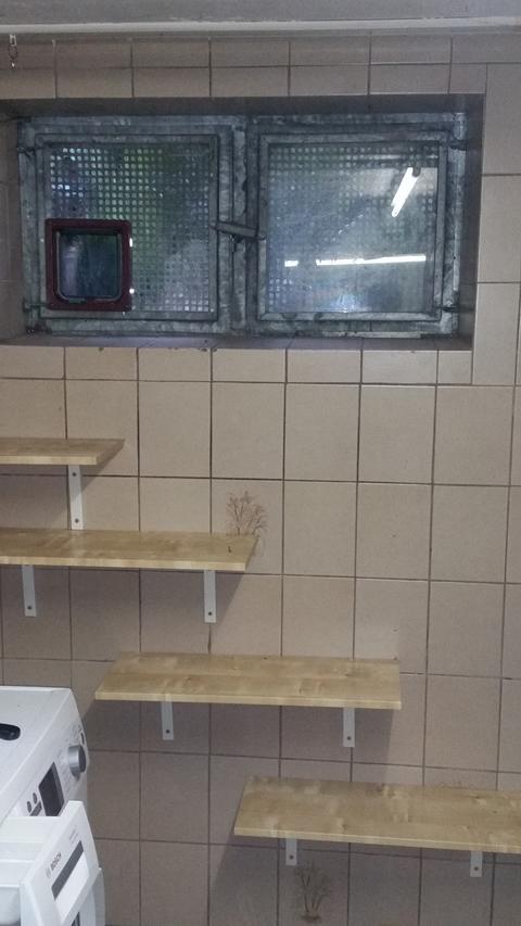 freig nger alleine lassen katzen forum. Black Bedroom Furniture Sets. Home Design Ideas