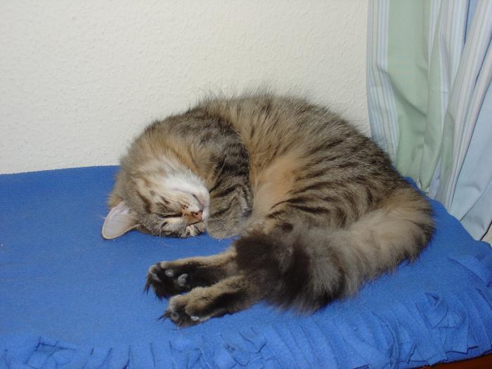 verknotetes fell bei katzen