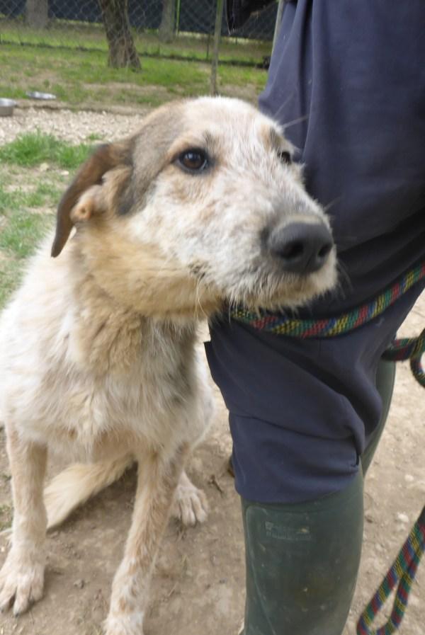 Bildertagebuch -  Verbena: junges, liebenswertes und sehr hübsches Hundemädchen wünscht sich eine aktive Familie! 25905425fy