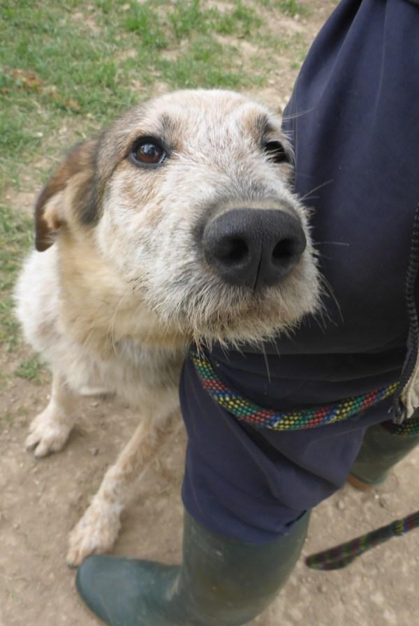 Bildertagebuch -  Verbena: junges, liebenswertes und sehr hübsches Hundemädchen wünscht sich eine aktive Familie! 25905426st