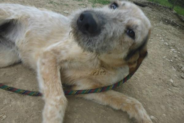 Bildertagebuch -  Verbena: junges, liebenswertes und sehr hübsches Hundemädchen wünscht sich eine aktive Familie! 25905428mf