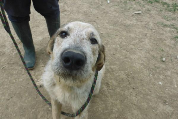 Bildertagebuch -  Verbena: junges, liebenswertes und sehr hübsches Hundemädchen wünscht sich eine aktive Familie! 25905434sb