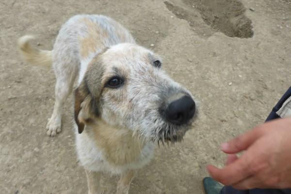 Bildertagebuch -  Verbena: junges, liebenswertes und sehr hübsches Hundemädchen wünscht sich eine aktive Familie! 25905439fd