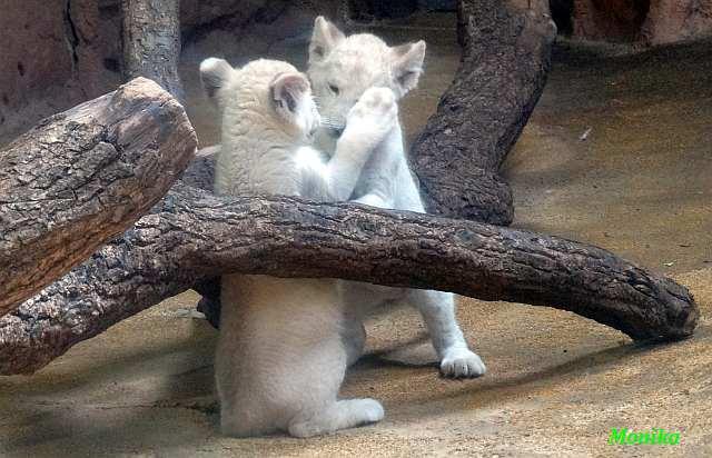 sicher dass du mit papa im zoo warst