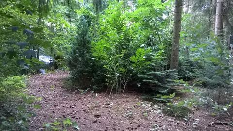 Waldgrundstück hilfe für unser waldgrundstück mein schöner garten forum