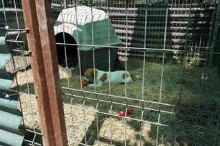 Pamatsch hat ein neues Zuhause gefunden 26185412uw
