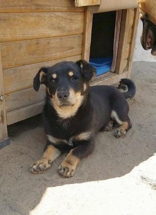 Bodza hat ein neues Zuhause gefunden 26244675qi