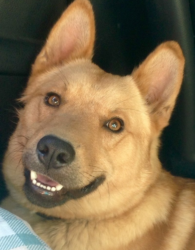 Bildertagebuch - Dingo, hübscher junger und verspielter Kerl ... Sie sind auf der Suche nach einem tollen Hundekumpel?? 26520482ho
