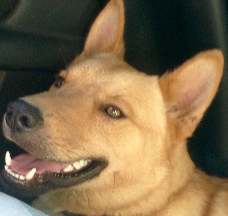 Bildertagebuch - Dingo, hübscher junger und verspielter Kerl ... Sie sind auf der Suche nach einem tollen Hundekumpel?? 26520483fe