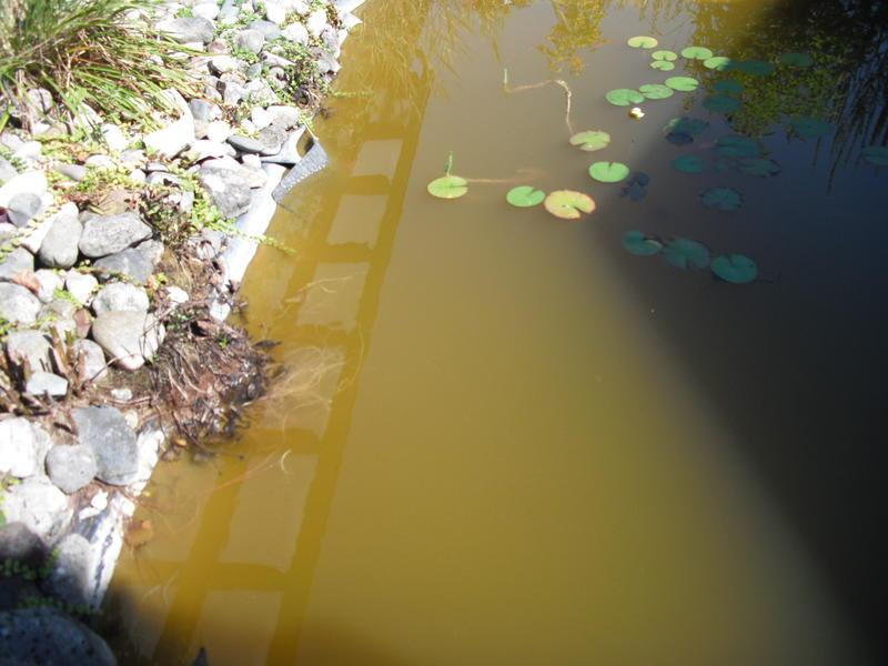 Wie Wird Das Wasser Wieder Klar Mein Schöner Garten Forum