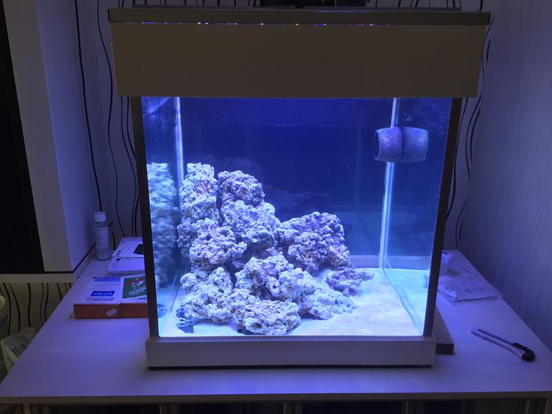Aus alt mach neu 60x60x60 aquarium vorstellung for Kampffisch aquarium