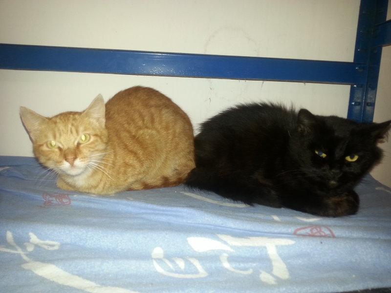 heute ziehen neue pflegis ein seite 5 cattalk das katzen forum. Black Bedroom Furniture Sets. Home Design Ideas