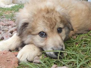 Teddy (Pedro) hat ein neues Zuhause gefunden 26851691jv