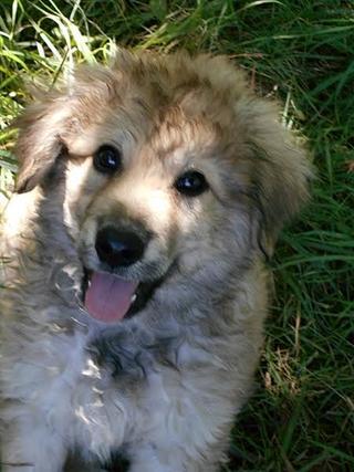 Teddy (Pedro) hat ein neues Zuhause gefunden 26851704zu