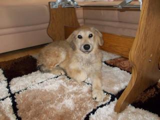 Teddy (Pedro) hat ein neues Zuhause gefunden 27034106md