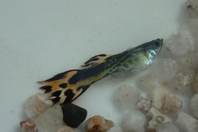 Fische bleiben am Boden des Tanks