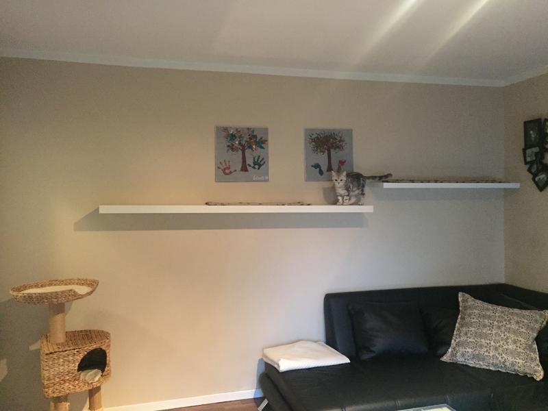 spanisch f r anf nger oder wir gr nden eine m dels wg. Black Bedroom Furniture Sets. Home Design Ideas
