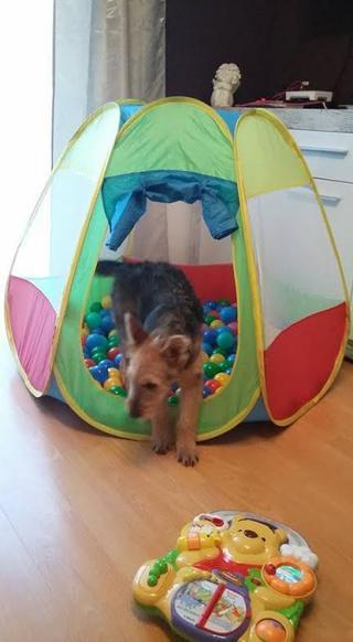 Jasmin /Saphira hat ein neues Zuhause gefunden 27578187dk