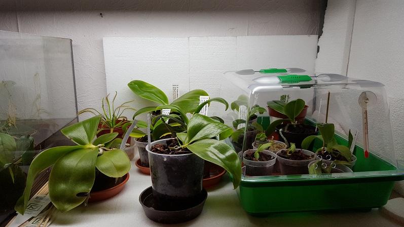 Orchideen Beleuchtung | Beleuchtung Fur Ein Regal Mit Orchideen Technik Laie Brauchte Rat