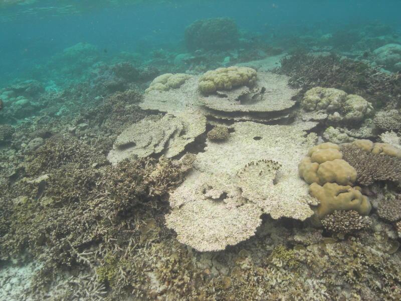 zustand korallen malediven 2017