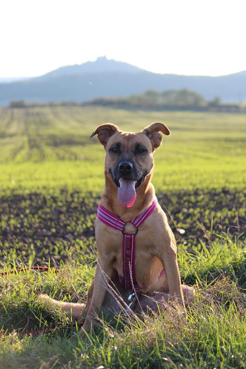 Bildertagebuch - Lina II, ein hübsche Lady die gerne Bällchen spielt und eine hundeerfahrene aktive Familie sucht ...VERMITTELT! 28079759ue