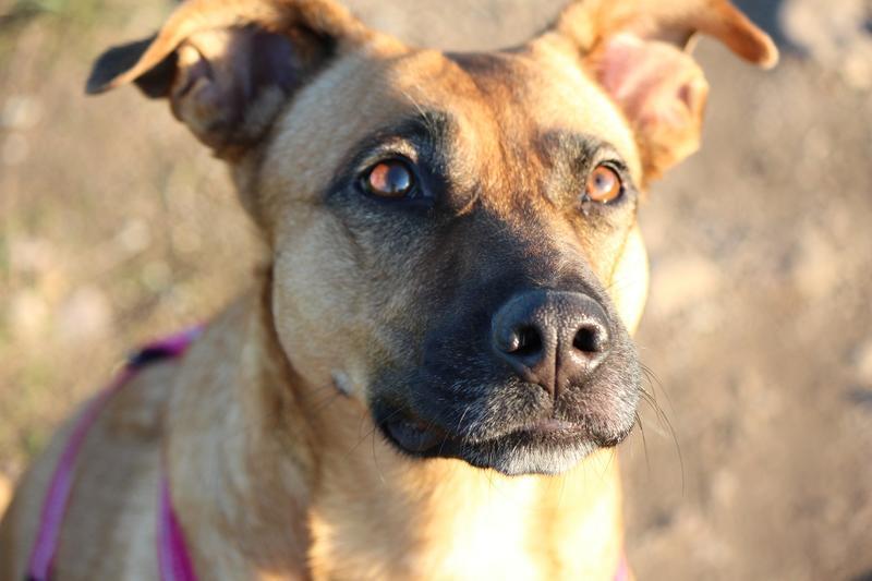 Bildertagebuch - Lina II, ein hübsche Lady die gerne Bällchen spielt und eine hundeerfahrene aktive Familie sucht ...VERMITTELT! 28079761mo