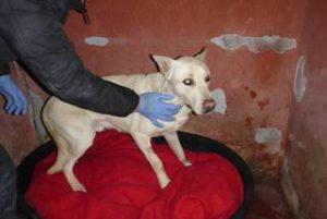 Heftiger Wintereinbruch in Italien – und auch die Hunde müssen frieren…  - NOTFELLE DOG VILLAGE (ITALIEN) 28102894ic