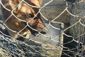 Heftiger Wintereinbruch in Italien – und auch die Hunde müssen frieren…  - NOTFELLE DOG VILLAGE (ITALIEN) 28102905og
