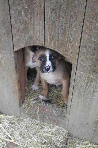 Vito hat ein neues Zuhause gefunden 28112255su