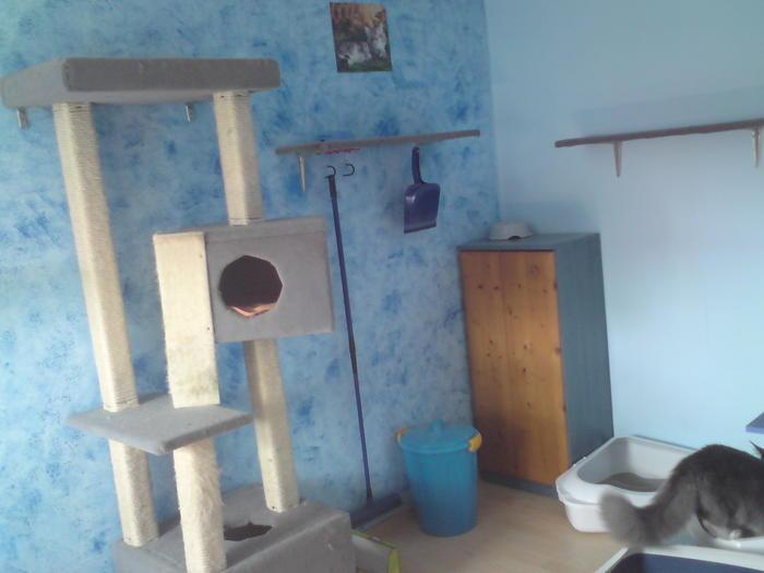 katzen kletter paradies selbst bauen brauche tips katzen forum. Black Bedroom Furniture Sets. Home Design Ideas