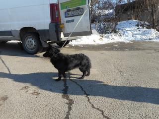 Pola lebt jetzt glücklich in Ungarn! 28286115yn