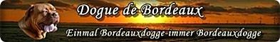 Alles über die Bordeauxdogge Caruso