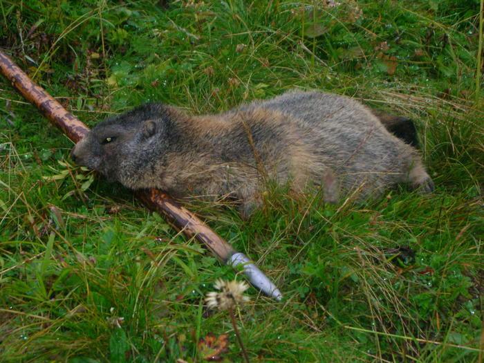 Entfernungsmesser Jagd Forum : Pirsch forum murmeljagd