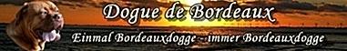 Alles über die Bordeauxdogge Caruso und seine Spielkameradin Emmely