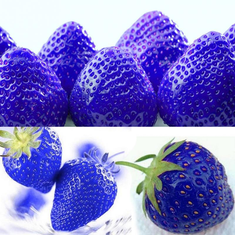 blaue garten erdbeeren garten erdbeeren ausgefallen selten 40 samen ebay. Black Bedroom Furniture Sets. Home Design Ideas